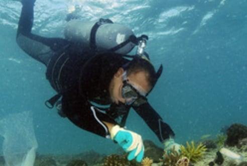 サンゴの植え付け作業をする金城さん