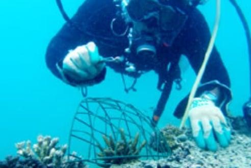 サンゴを保護する網をかぶせる金城さん