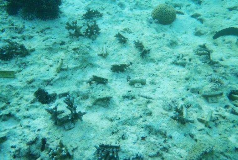 サンゴを植樹する前の改定の様子